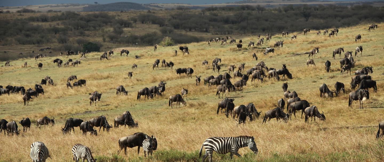 Wild game at the Mahali Mzuri Game Viewing Safari in Kenya
