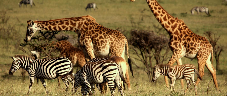 Wildlife at Mahali Mzurie