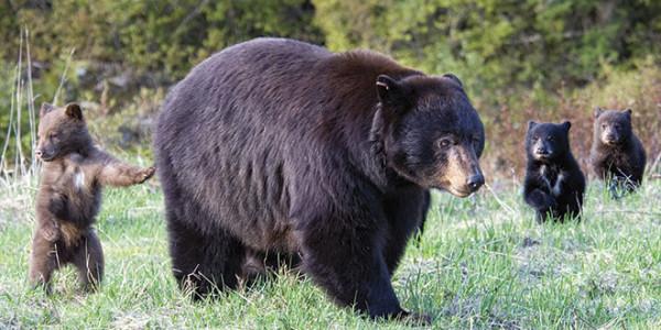 Jeanie-cubs-2009-730x330